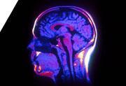 A la découverte du cerveau